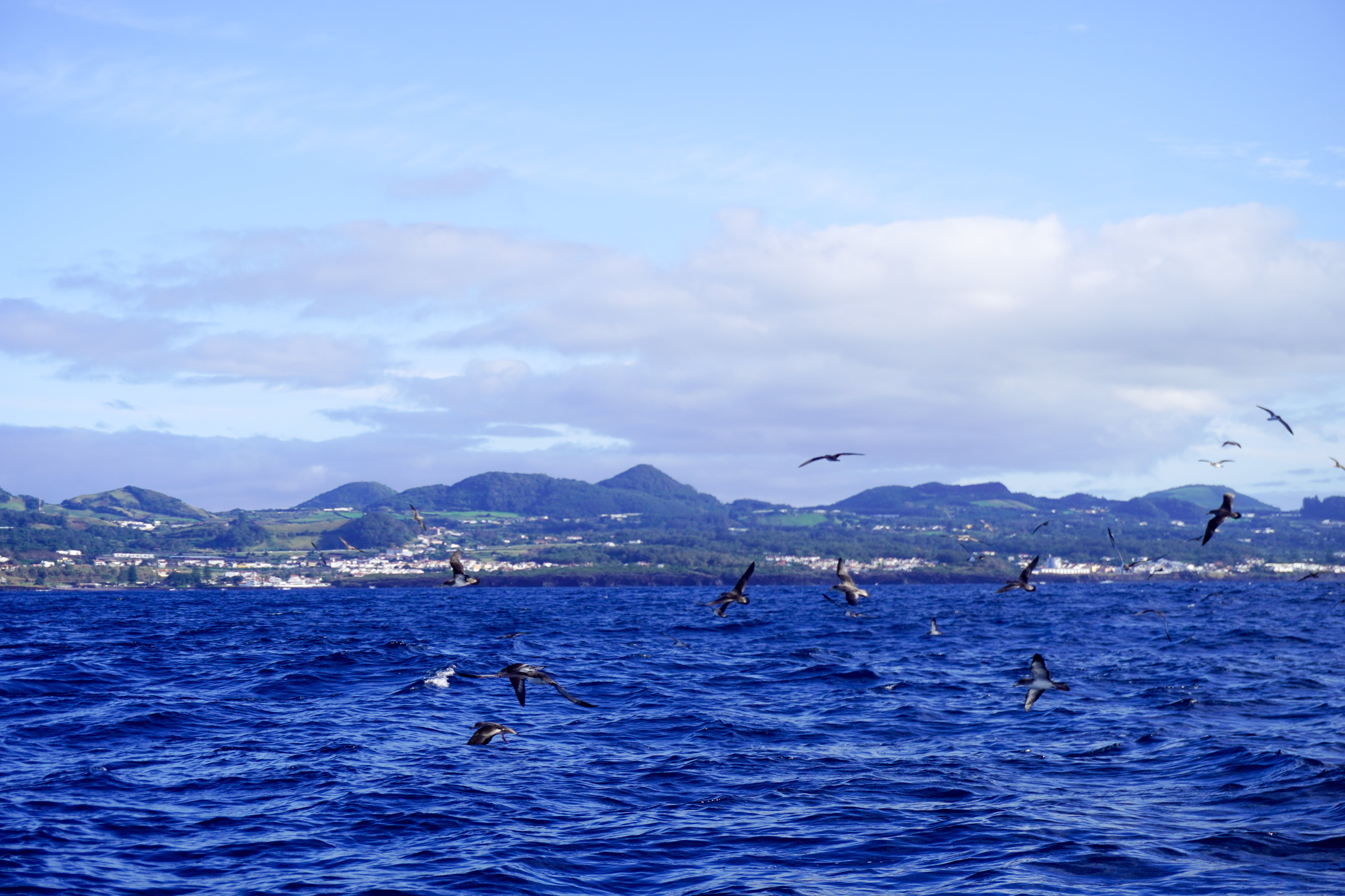 Whale watching nelle azzorre